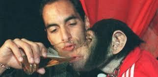 edmundo scimmia 2 - Edmundo o animal: Tutta la storia!